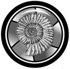BW-Shell-shutter-logo